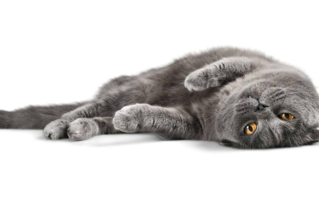 15 fotografija mačaka koje dokazuju da ih nikada ne možemo istinski razumjeti!
