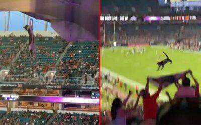 Navijači u Americi uz pomoć zastave uhvatili mačku koja je pala s krova stadiona (VIDEO)